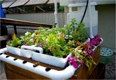 aquaponics-how-to