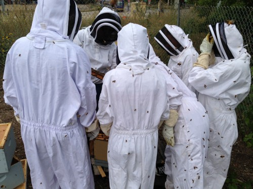 We looked carefully in search of the one queen bee nestled in the middle of all the action.